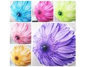 зонтик 50 см 6 цветов со свистком(113703)